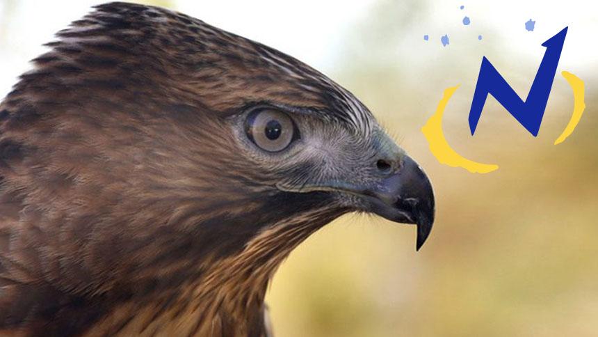 Closeup of bird of prey head with Navigators logo