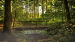 Wooden bridge over stream in forest with sun filtering through branches